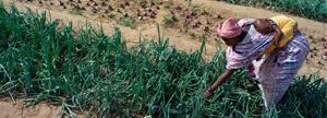 Entregas semillas para cultivo a 2 familias para que puedan producir sus propios alimentos  1 año entero