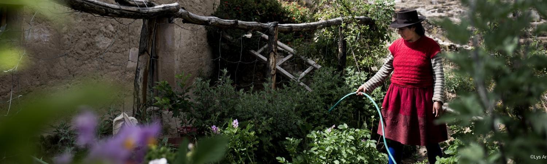 Perú: agricultura y técnicas ancestrales para combatir la anemia y la desnutrición