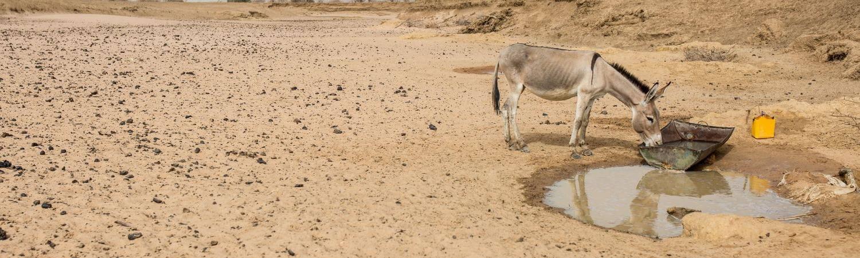 Mauritania: sobrevivir del pastoreo en época de sequía