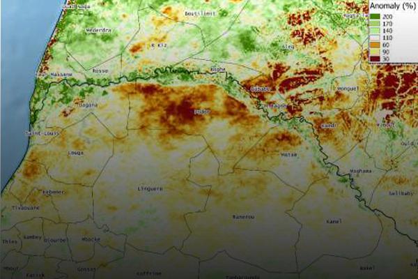 Análisis de la producción de biomasa en 2014 y perspectivas para 2015