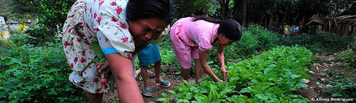 Evaluación y seguimiento del estado de seguridad alimentaria