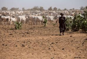 Sequía en Sahel: el análisis de biomasa anuncia una grave crisis en Mauritania y Senegal