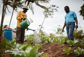 HAITÍ: Una de cada tres personas necesita ayuda alimentaria urgente
