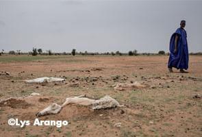 SENEGAL: 245 000 personas sin alimentos por la tercera sequía en seis años
