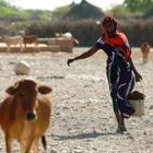 Las comunidades rurales de Somalia están al límite por la falta de agua