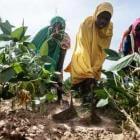 ¿Qué es la soberanía alimentaria?