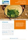 Moringa Oleífera: un aliado en la lucha contra la desnutrición