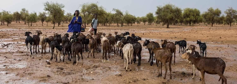 Inteligencia artificial para luchar  contra el cambio climático en Sahel