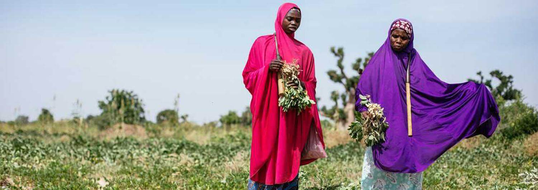 Sembrando semillas contra la desnutrición