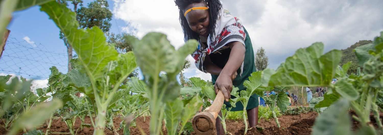 Huertos: un medio de vida para mejorar la salud en Kenia.