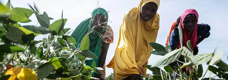 Más de 2370 millones de personas padecen inseguridad alimentaria.